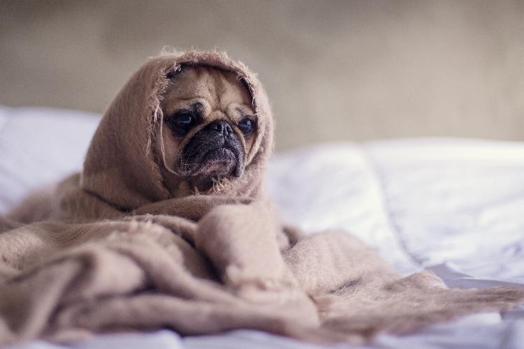 衣服に包まれた犬
